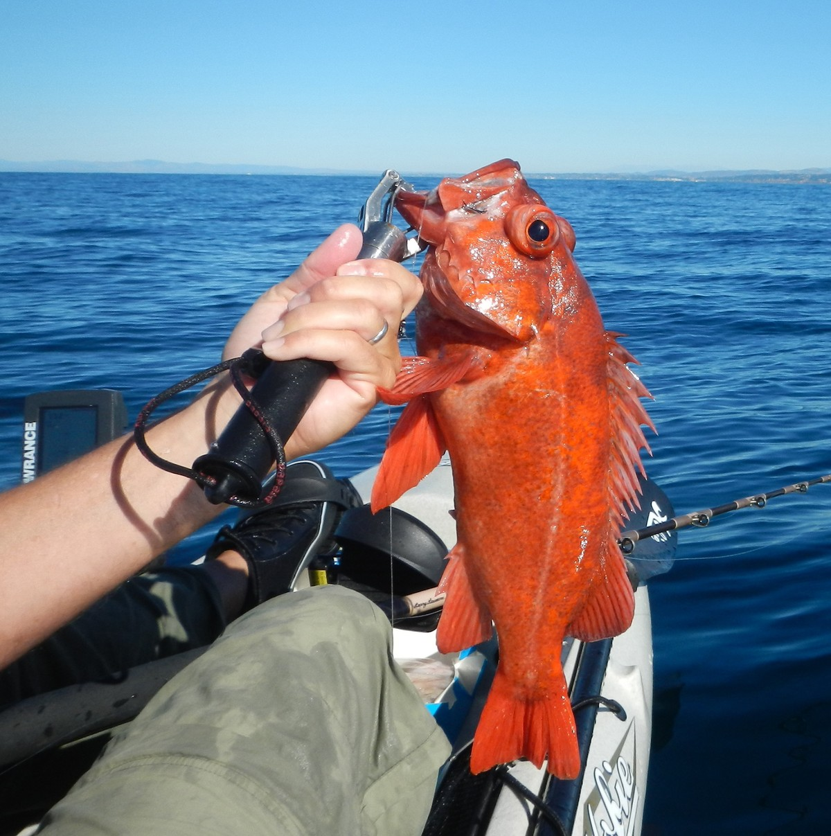 The Down Low on Rockfish | Hobie