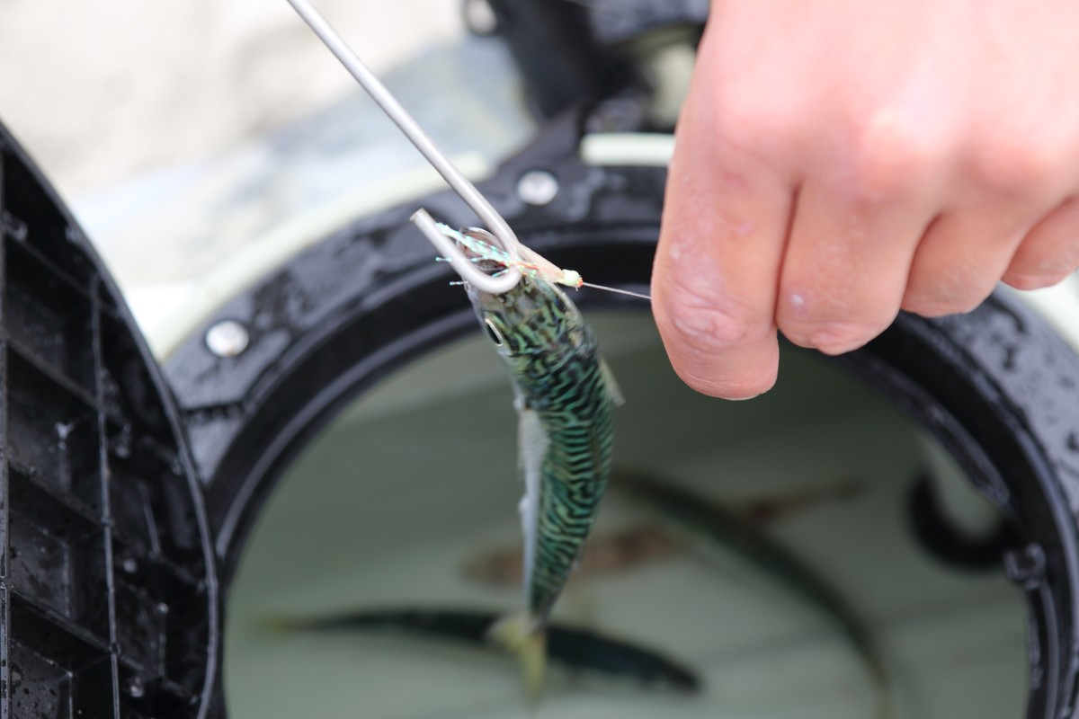 Article image - The Best Bait Catching Tip
