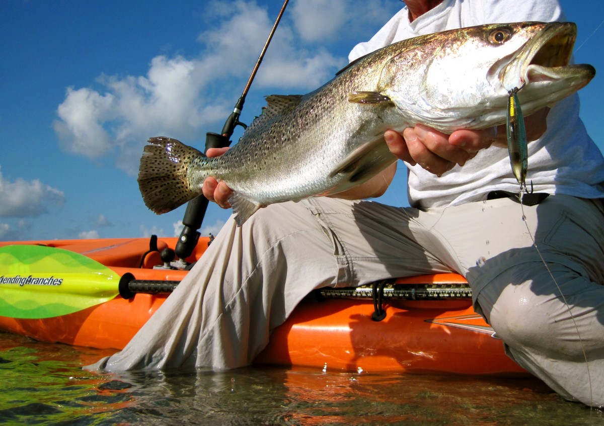Article image - Trophy trout tips