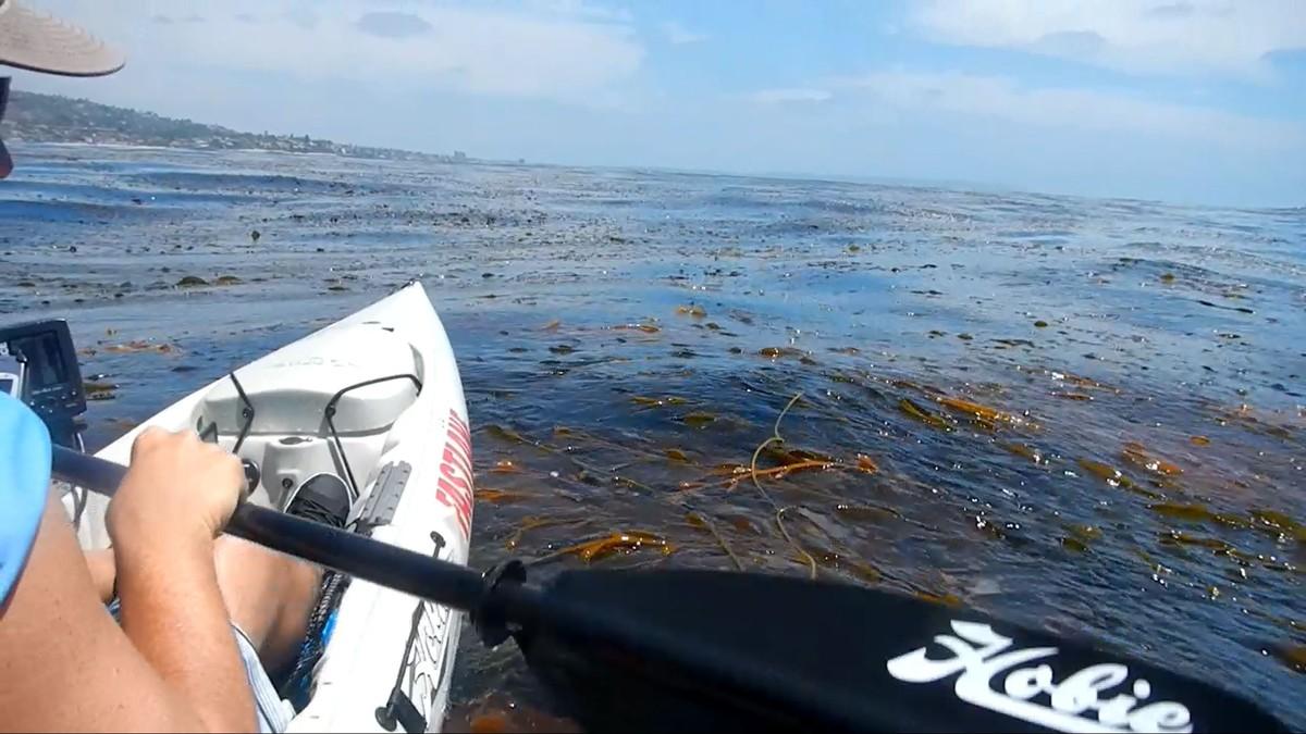 Article image - Coastal Calicos by Kayak
