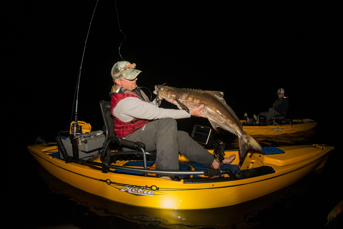 Article image - Falling for Cobia
