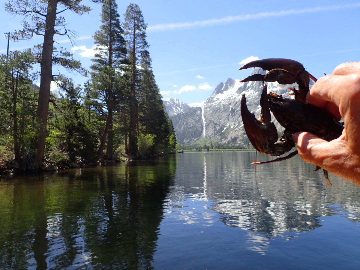 Article image - Mile high Trout and crawdad