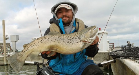 Article image - Brown trout