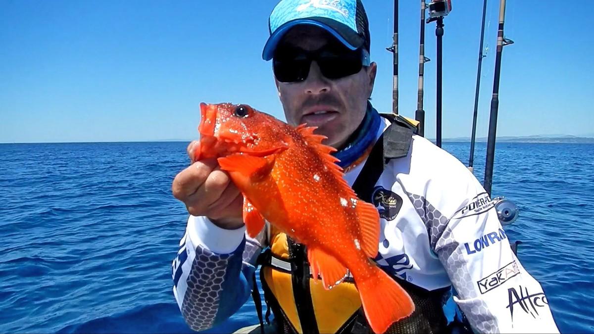 Article image - Top Gun rockfish