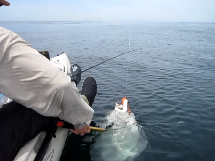 Article image - Hobie Kayaks and Halibut