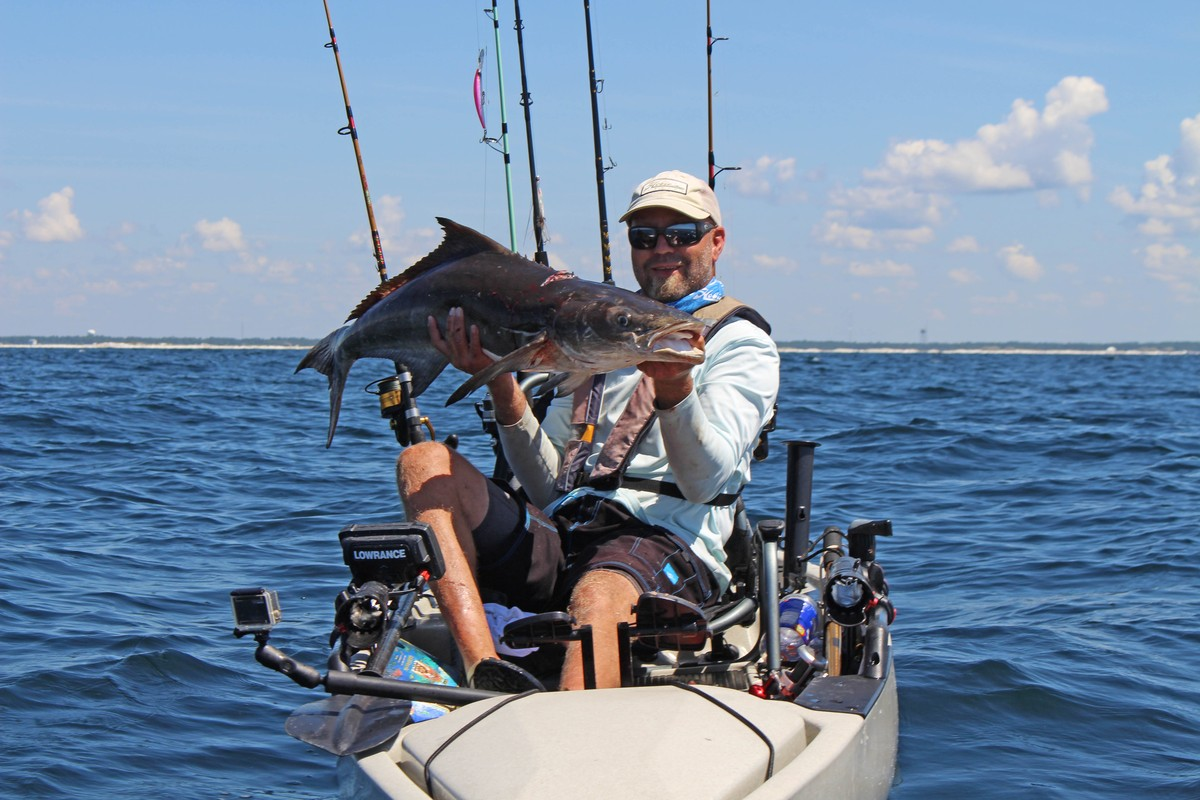 Article image - cobia